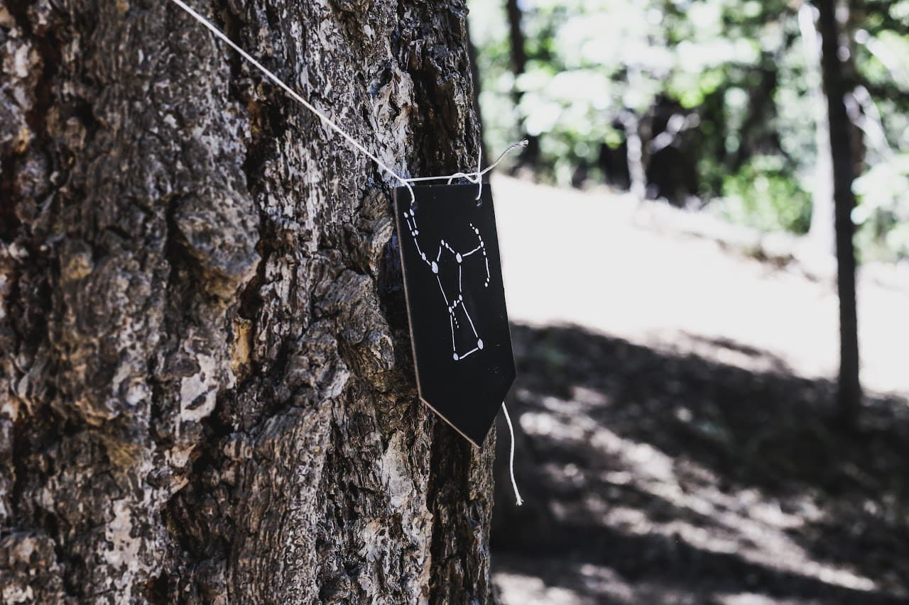 Blackwood Charter | Tree